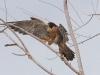 falcon-perigrine-no1-rio-solado-july-2006