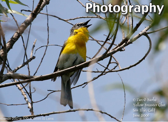 fp-bird